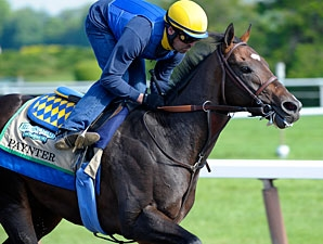 Paynter Diagnosed With Laminitis Bloodhorse