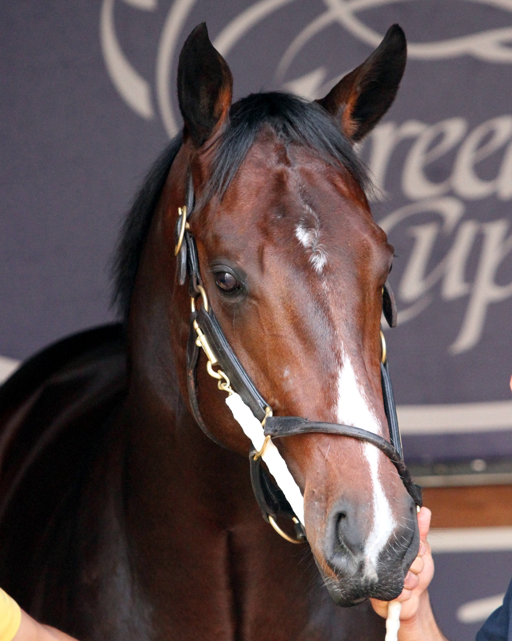 Thoroughbred News Sire Lists Blogs Video Pedigree