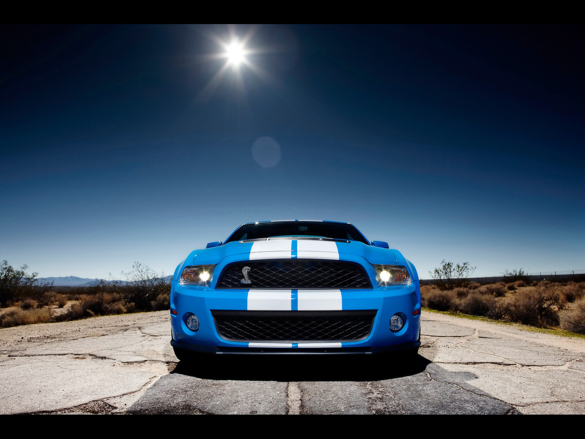 Top Class 3d Wallpapers Drive A Shelby Mustang In Las Vegas Shelby Driving