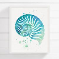 Best Sea Shells Wall Art Products on Wanelo