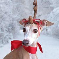 Max the Grinch Dog head antler for from Olipra on Etsy
