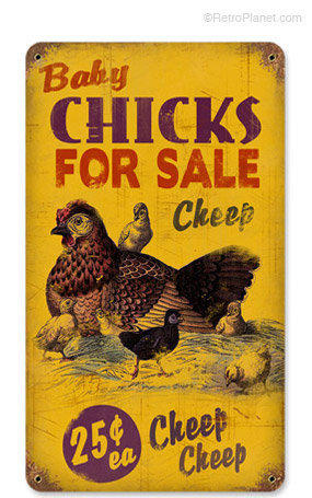 Cheap Baby Chicks for Sale Tin Sign  Tin from retroplanetcom