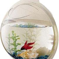 Wall Mounted Fish Bowl Bubble for from Amazon   Homie
