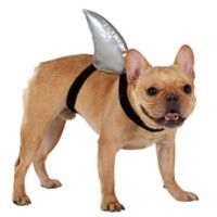 Top Paw Shark Fin Costume   Costumes   from Pet Smart ...