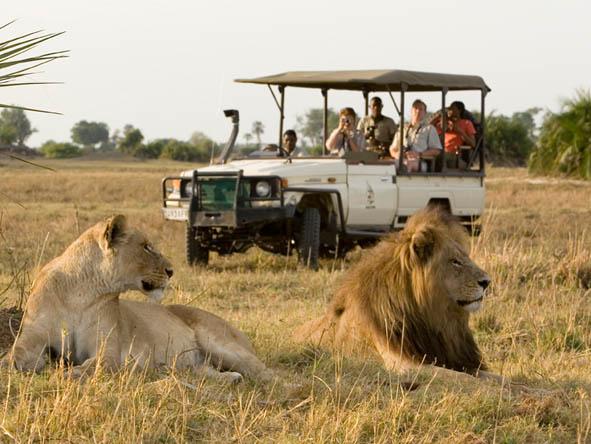 Image result for okavango delta safari