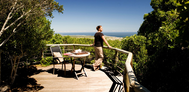 A Garden Route Road Trip - in the milkwood forest at Grootbos