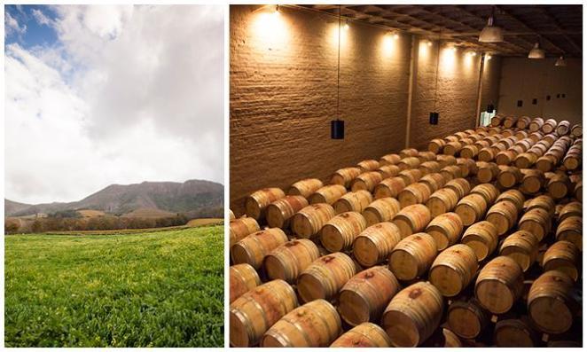 Constantia Wine Tour 3