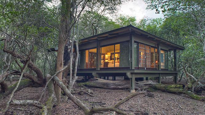 KwaZulu Natal - Phinda Forest Lodge