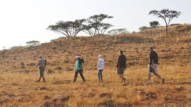 KwaZulu Natal - walking safari