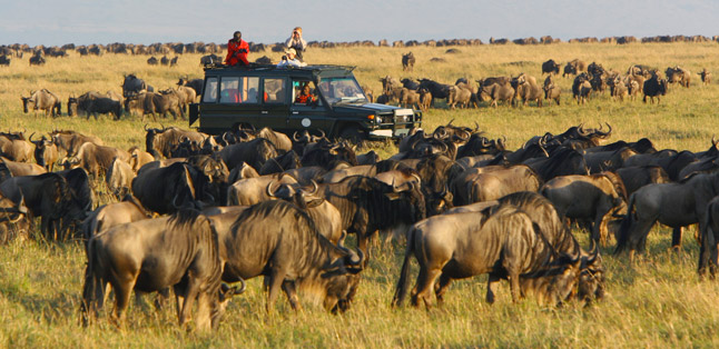 See the Wildebeest Migration, Serengeti National Park, Tanzania - travel destinations, africa destinations, travel tips, travel ideas, travel hacks, travel guide, road trip, adventure travel, bucket list, south africa