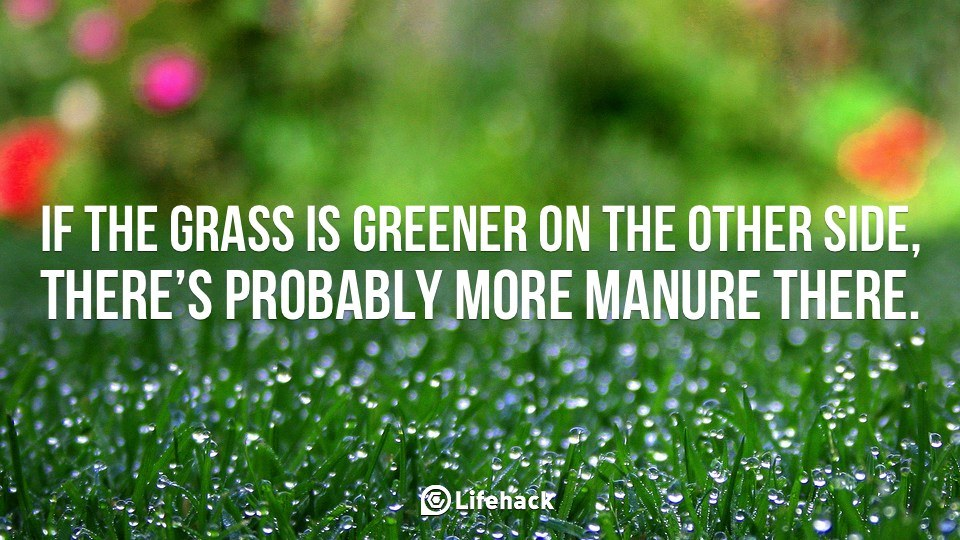 Image result for grass is greener