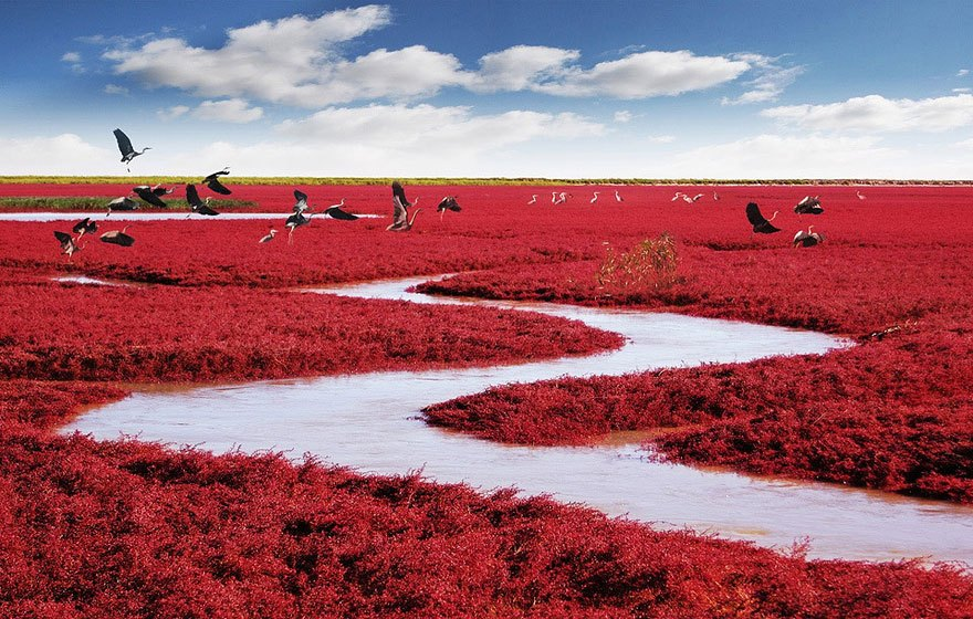 panjin-red-beach-china-20