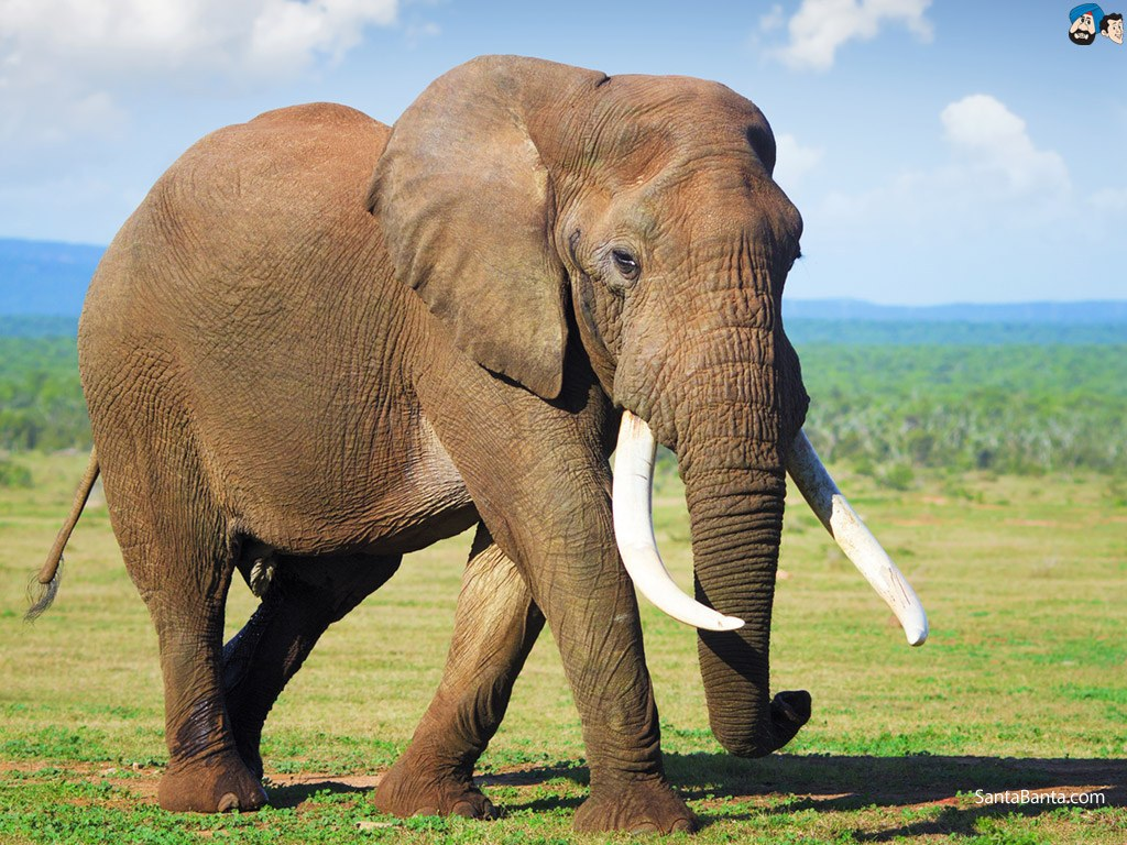 elephants-9a