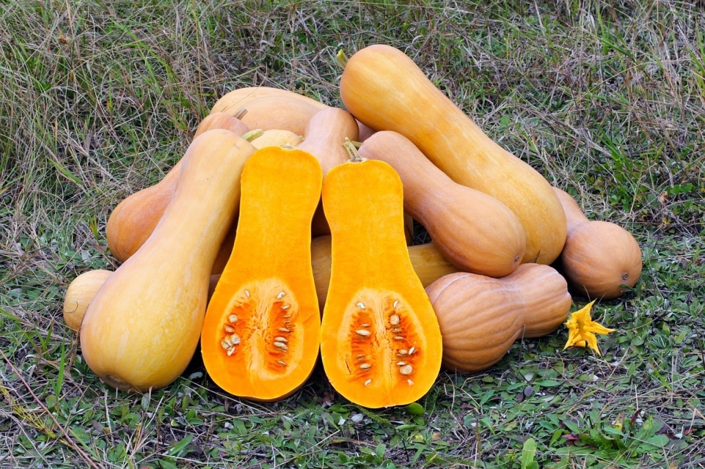 Butternutsquash