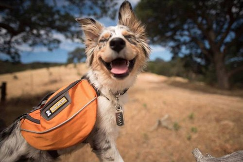 camping-with-dog-ryan-carter-58__605