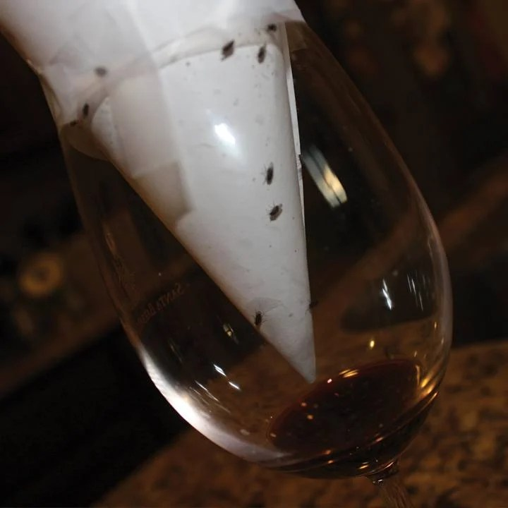8-Uses-For-Wine-Thats-Gone-Bad-Fruit-fly-trap-720x720-slideshow