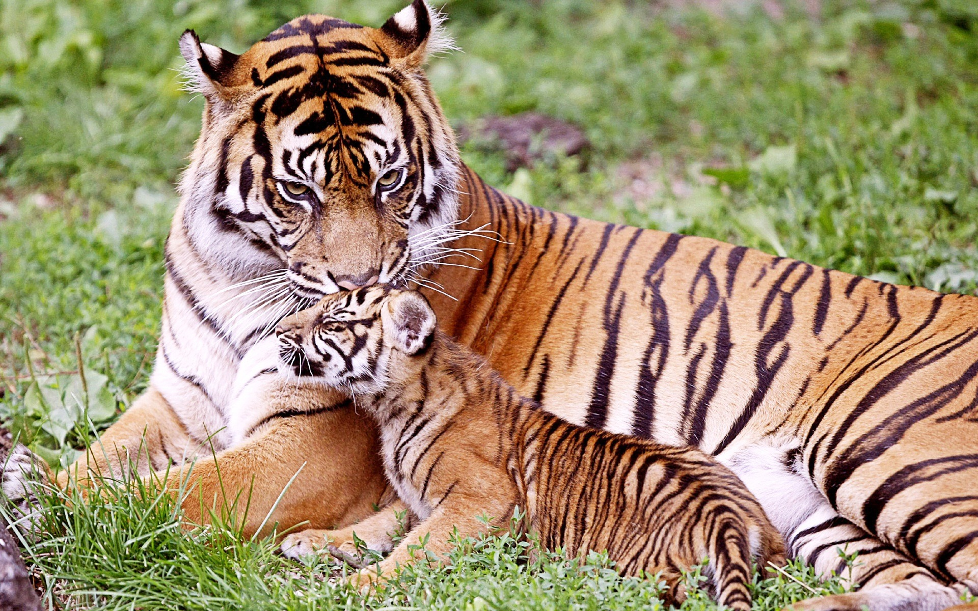 These 36 Animal Parents With Their New Born Babies In The