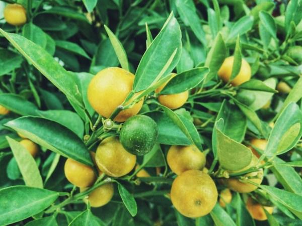 healthy-foods-lemons