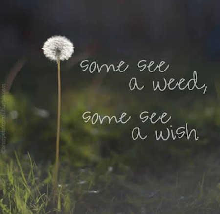 Lifehack_Quotes_wish