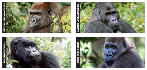 grandes-primatas-extinção-declinio-alarmante-da-especie