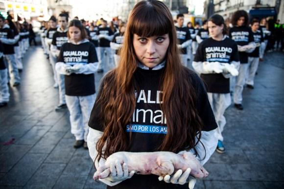 dia-internacional-direitos-animais-igualdad-animal-vegan