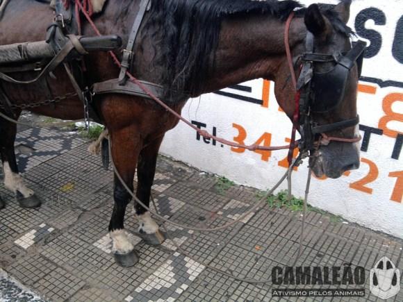 audiencia-tratara-sobre-proibicao-de-carrocas-em-taubate-fotos-ONG-CAMALEÃO