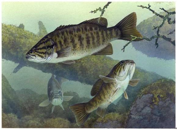 contaminacao-de-agua-pela-pecuaria-esta-danificando-animais-aquaticos