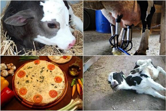 apos-intervencao-do-camaleao-empresa-retira-queijo-do-cardapio-especismo-antropocentrismo-flexitarianismo-vegetarianismo-mussarela-leite-barão-natural