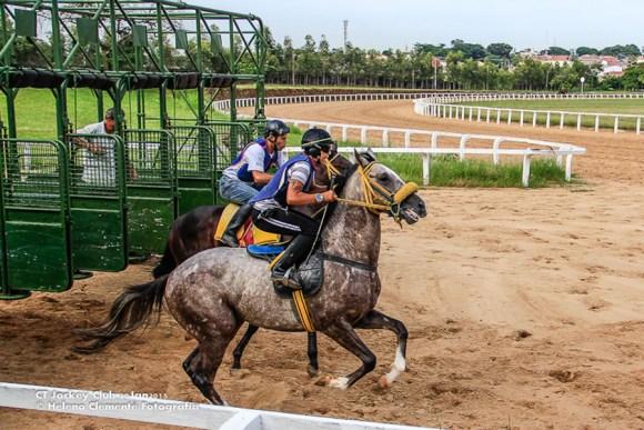 o-sofrimento-dos-cavalos-usados-na-tracao-e-em-corridas-carroças-rodeios-equinos-maus-tratos