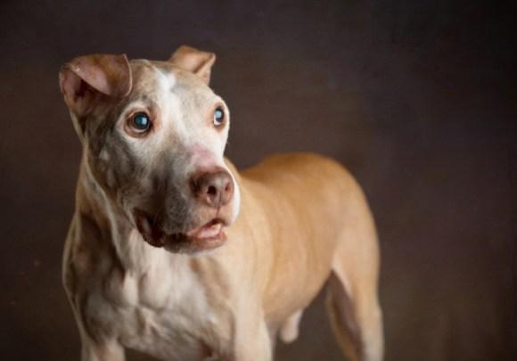 Walter-adoção-responsável-consciente-não-compre-animais-adote-cachorros-gatos