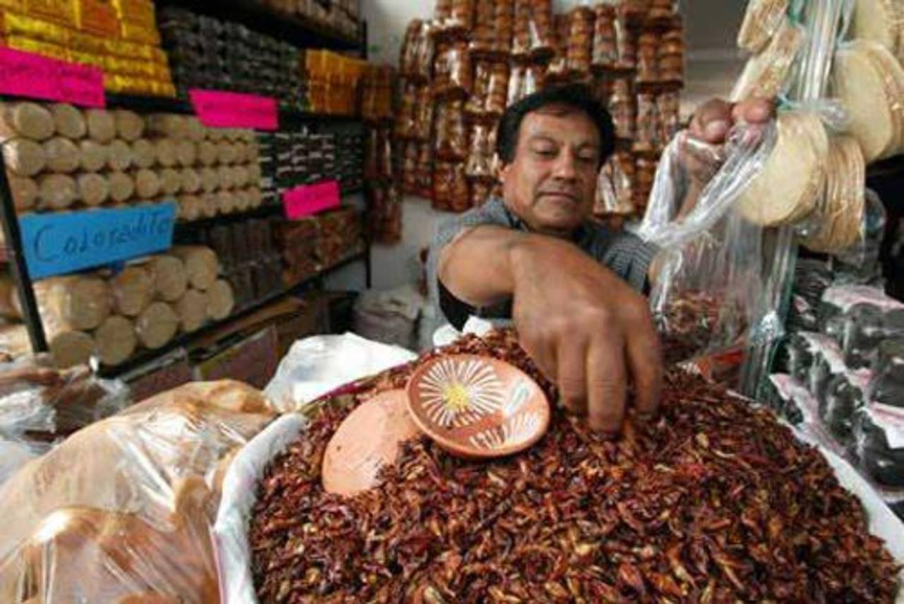 FAO Consumir insectos es saludable  elsalvadorcom