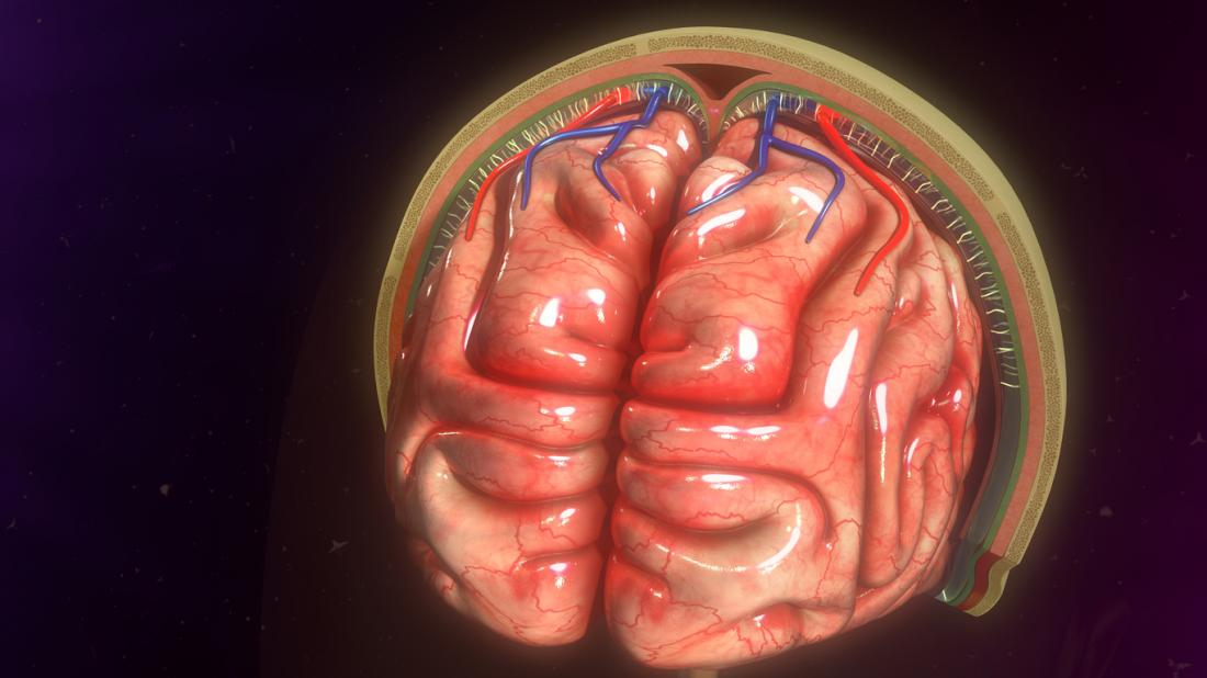 [Meningitis meninges]