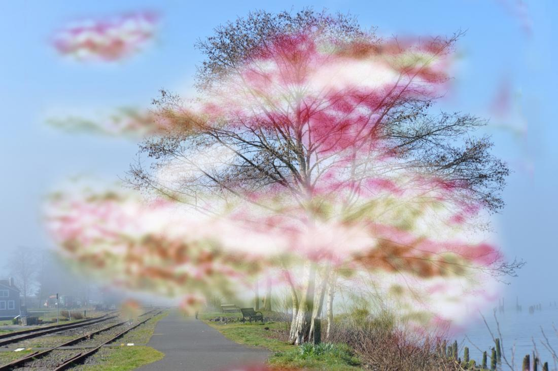 migraine with aura representation with blurred hue around a tree