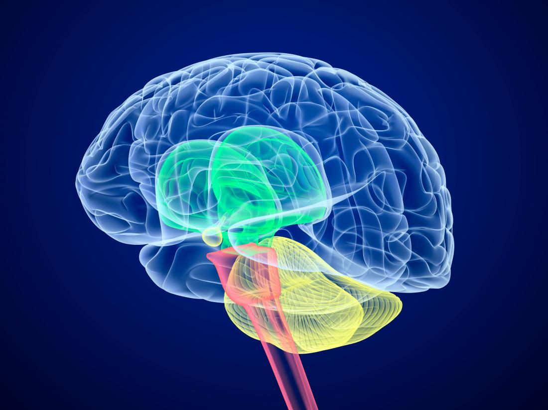 뇌의 다이어그램