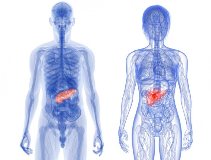 What is an Atrophic Pancreas?