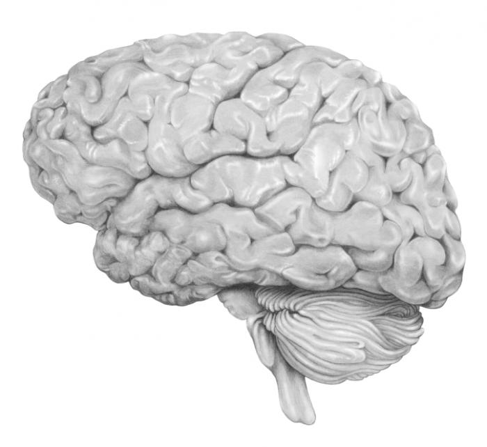 [Brain Illustration]