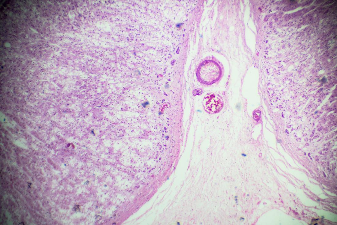 adrenal gland microscope