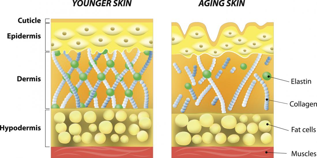 With age, collagen weakens, leading to wrinkles and cartilage problems.