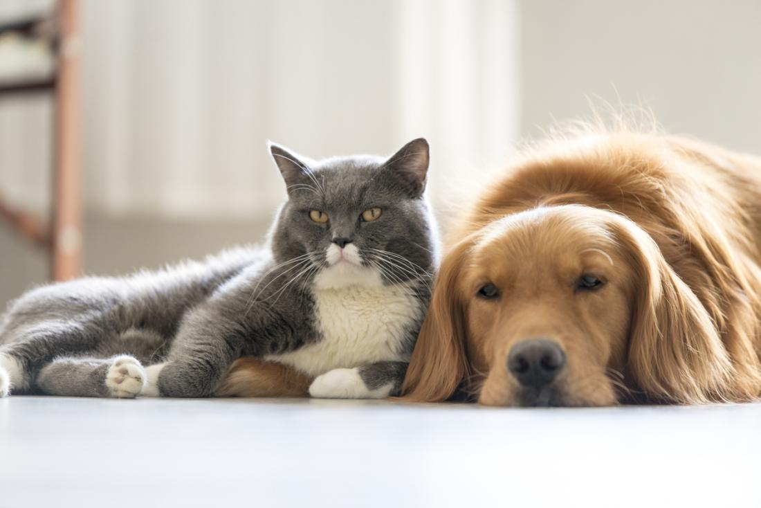 Dog and cat friends