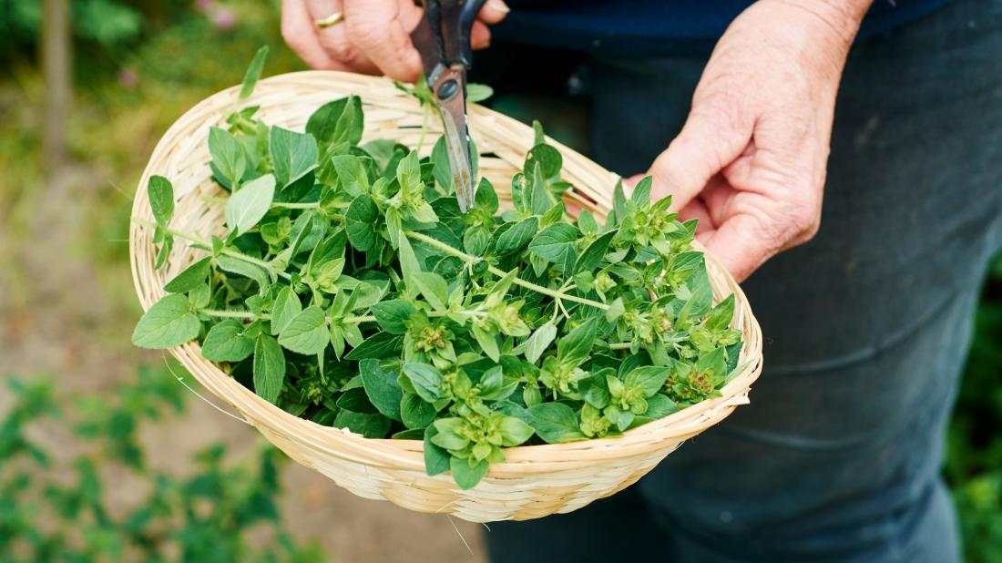 a person chopping oregano that is in a basket