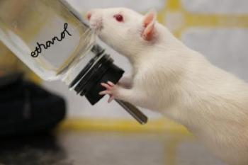rat drinking alcohol solution