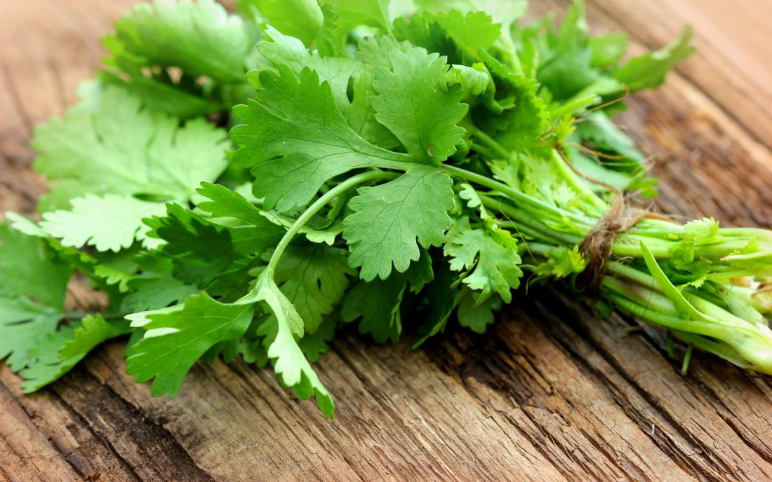 Bunch of fresh coriander or cilantro on a wooden table