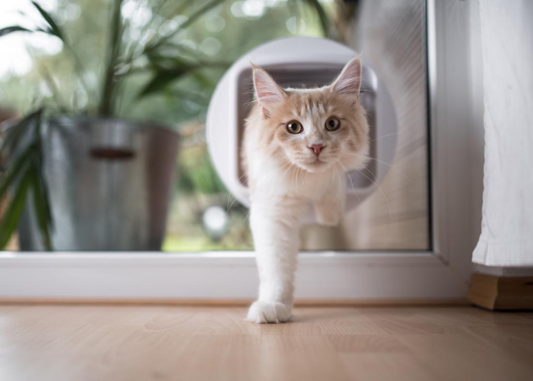 a cat walking through a cat flap