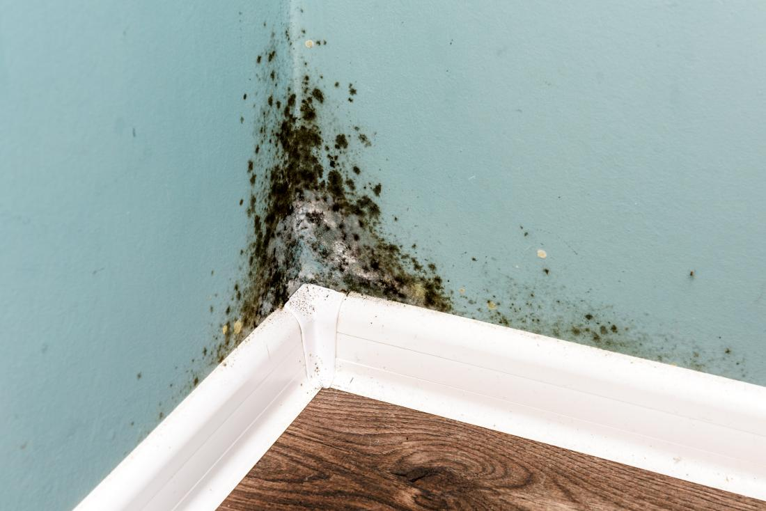 Mold In The Home How Big A Health Problem Is It