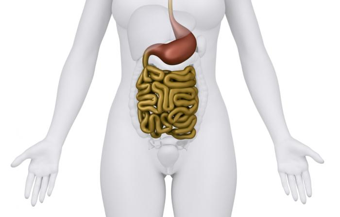 Diagram of the digestive system.