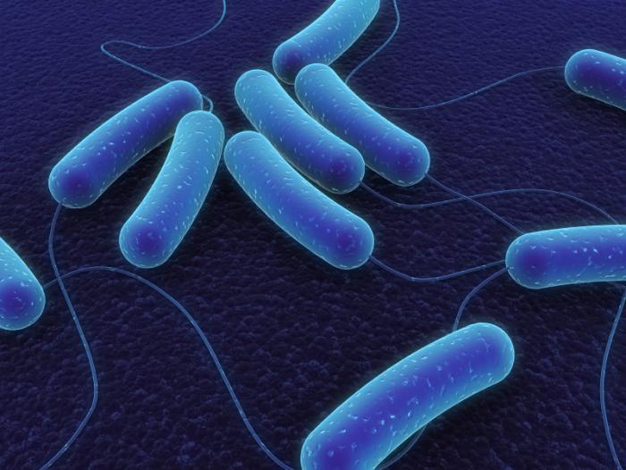Les bactéries