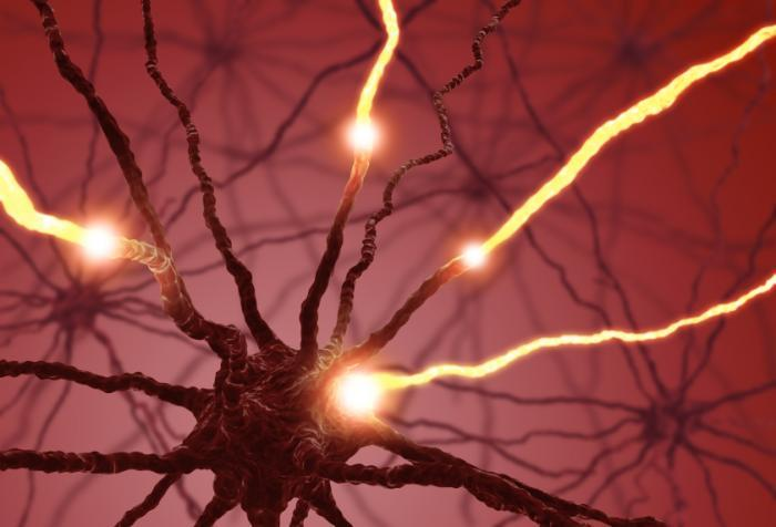 neurons lighting up