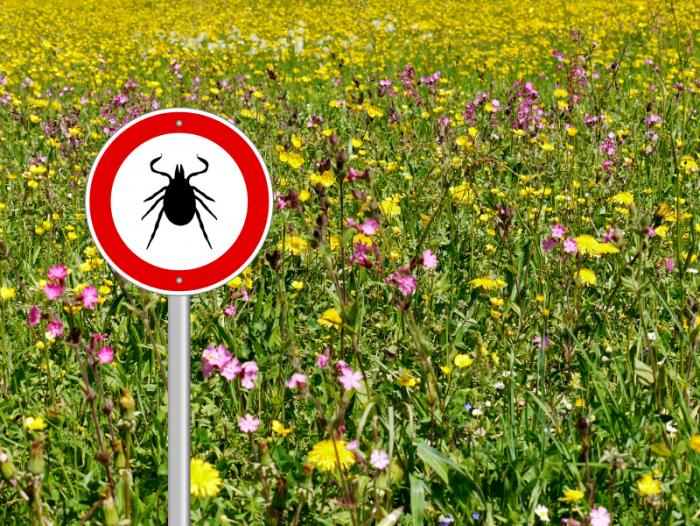 Tick warning sign in a meadow.