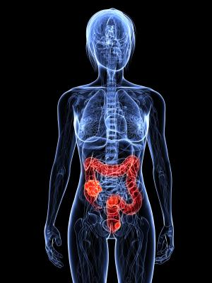human body with bowel highlighted