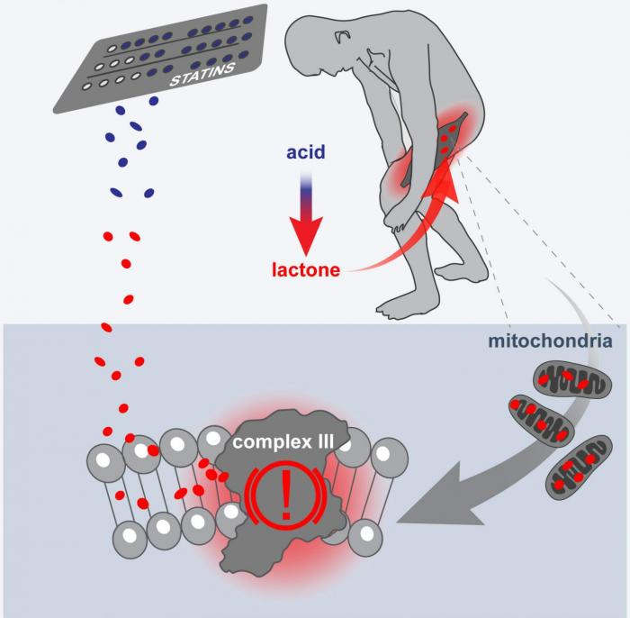 statin effect on mitochondria